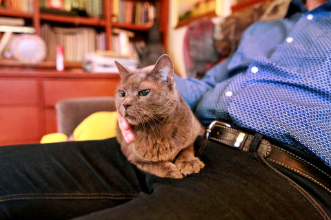 cat on a man's lap. The man is not petting the cat