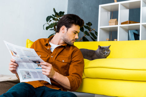 man reading paper and looking at a cat on a yellow sofa