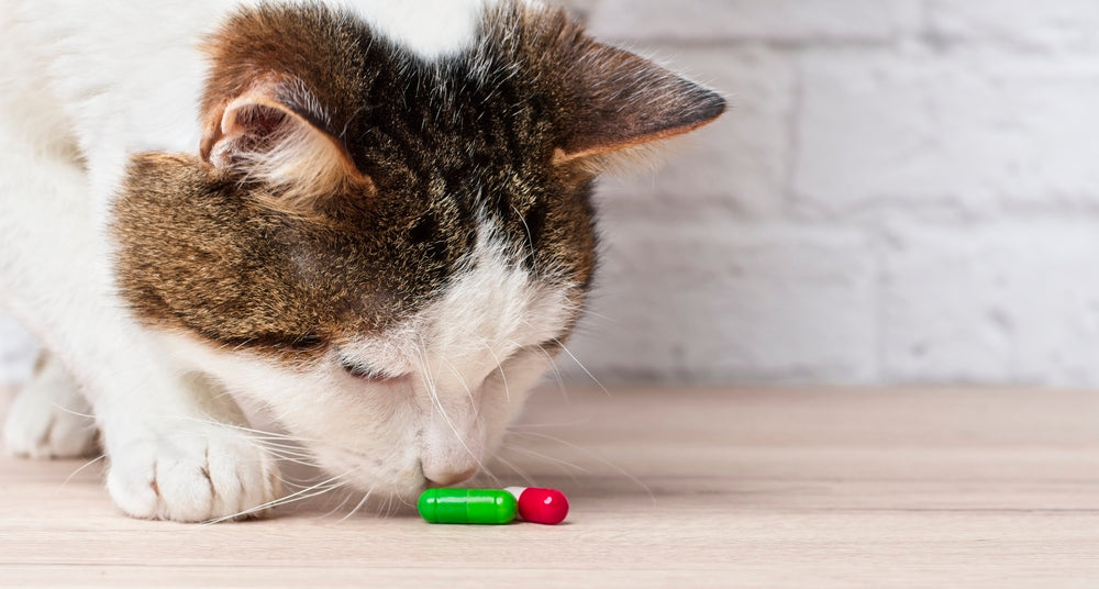 cat looking at two pills