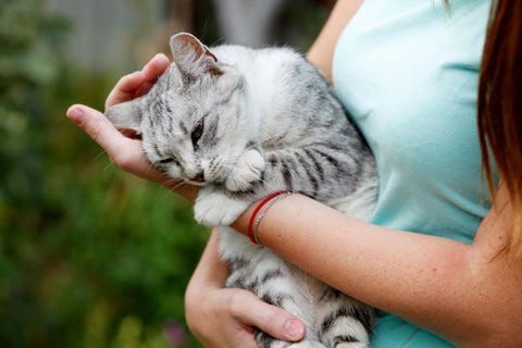 cat rubbing head on a person's hand