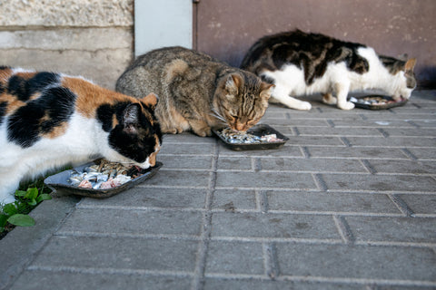 3 cats eating separately