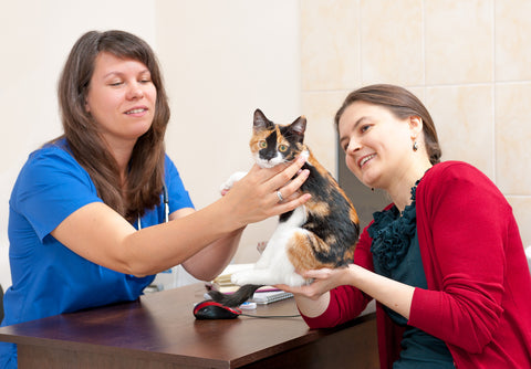 cat owner consults vet about cat