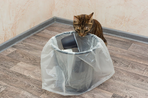 kitten looking into garbage can
