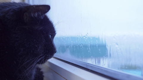 cat in the window looking at the rain