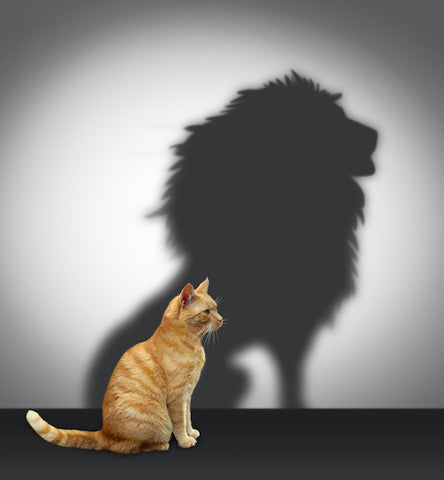 cat with a lion shadow