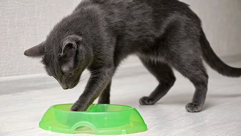 gray cat taking food out of bowl