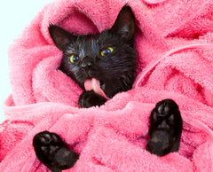 cat in a pink towel