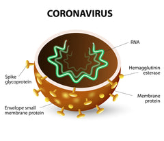 corona virus drawing