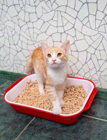 orange and white tabby cat in the litter box
