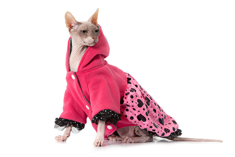 sphynx cat in clothing