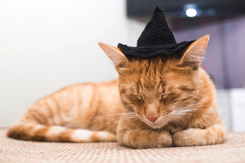cat with a witches hat