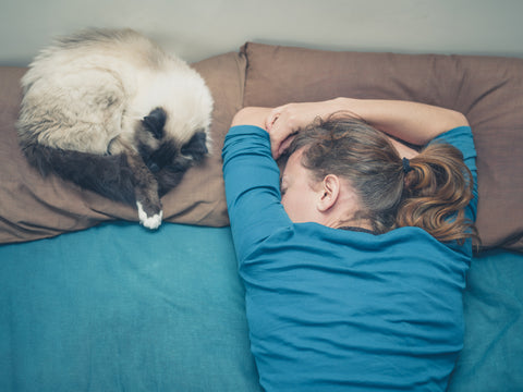 cat sleeping in bed with a sleeping person