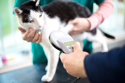cat being scanned by a microchip scanner