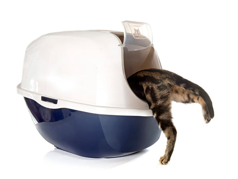 cat using litter box