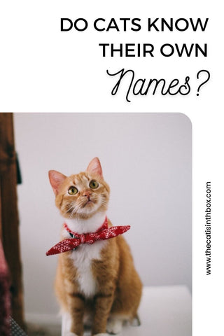 do cats know their own names?  Pinterest-friendly pin