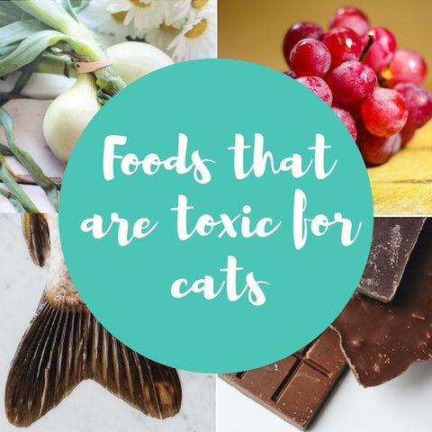 Foods that are toxic for cats