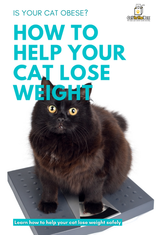 How to help your cat lose weight Pinterest-friendly pin
