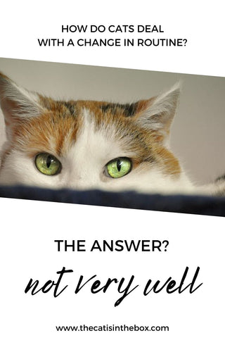 How do cats deal with a change in routine? Pinterest-friendly pin