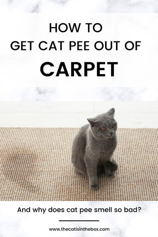 how to get cat pee out of carpet - Pinterest-friendly pin