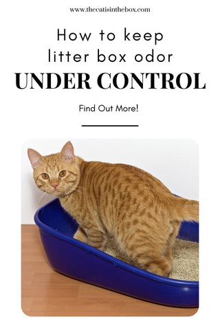 How to keep litter box odor under control - Pinterest-friendly pin