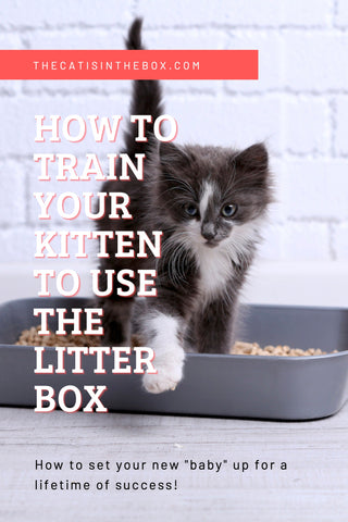 How to train your kitten to use the litterbox Pinterest-friendly pin