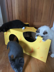 All four foster kittens examine the Monster Cheese Wedge