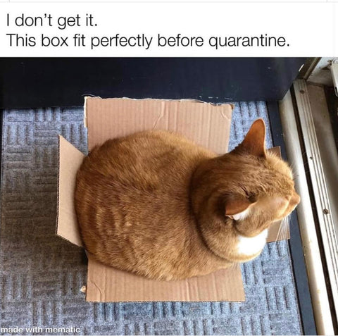 cat who doesn't fit in a box