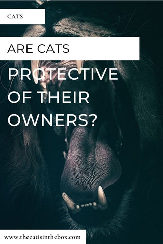 Are cats protective of their owners?