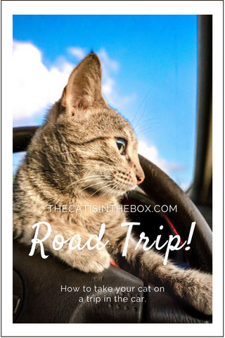 Road Trip! How to take your cat on a trip in the car - Pinterest-friendly pin