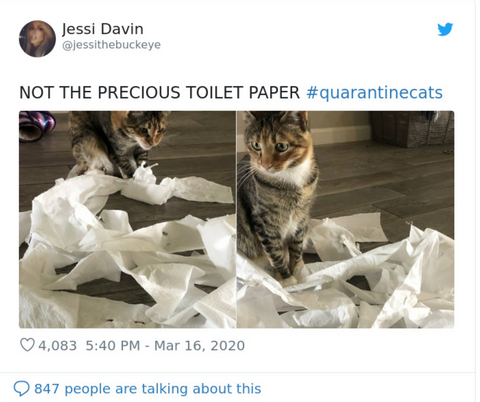 Cats and the coronavirus quarantine - memes on the web ...