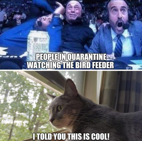 cat quarantine meme
