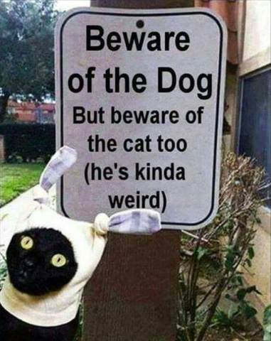 Beware of dog but beware of the cat too (he's kinda weird) sign