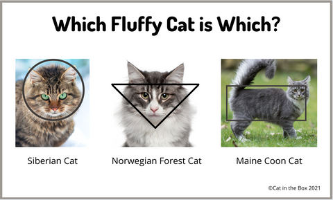Which Fluffy Cat is Which?