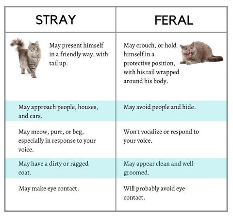 how to tell the difference between a stray cat and a feral cat