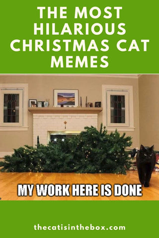 The most hilarious Christmas cat memes and cartoons - Pinterest-friendly pin