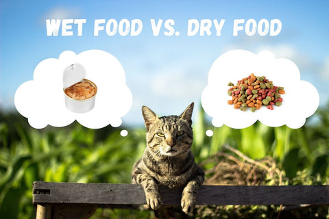 wet food vs dry food