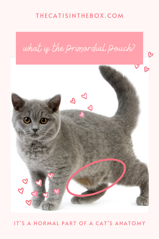 What is the primordial pouch? Pinterest-friendly pin