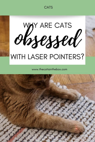Why are cats obsessed with laser pointers - Pinterest-friendly pin