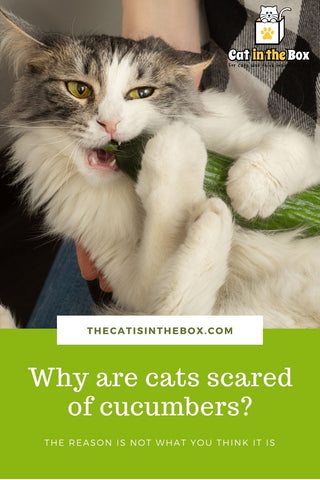Why are cats scared of cucumbers - Pinterest-friendly pin