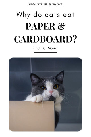 Why do cats eat paper and cardboard Pinterest friendly pin