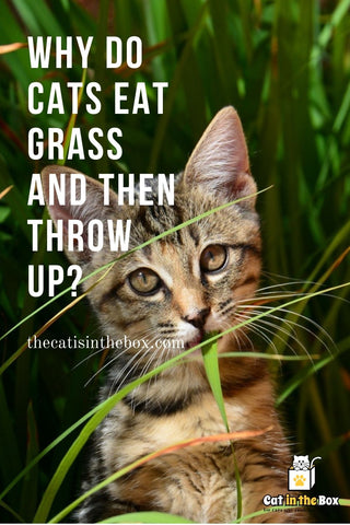 why do cats eat grass and then throw up? - Pinterest-friendly pin