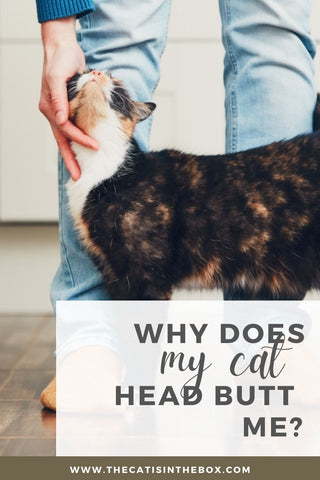 Why does my cat head butt me? Pinterest-friendly pin