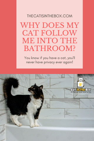 Why does my cat follow me into the bathroom? Pinterest-friendly pin