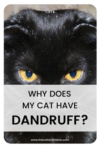 Why does my cat have dandruff? Pinterest-friendly pin