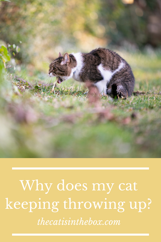 why does my cat keeping throwing up? Pinterest-friendly pin