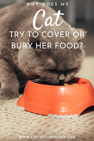 Why does my cat try to cover or bury her food? Pinterest-friendly pin