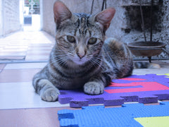 cat sitting on foam squares