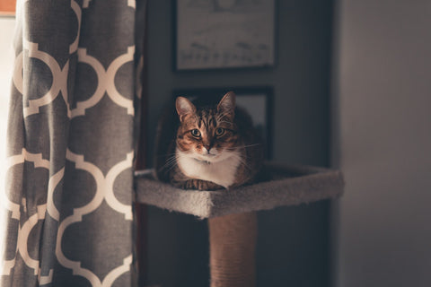 cat on a perch