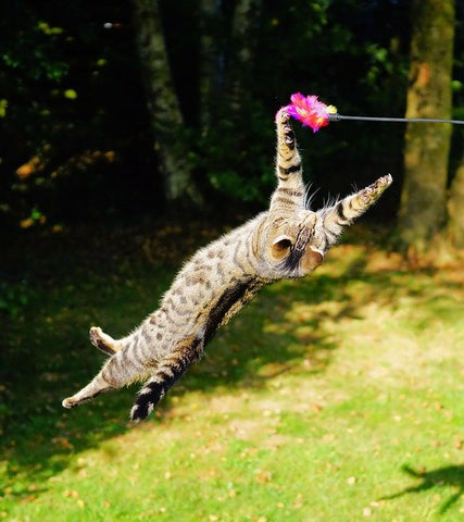 cat playing with a fishing rod toy outdoors