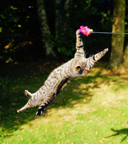 cat twisting to play with a toy